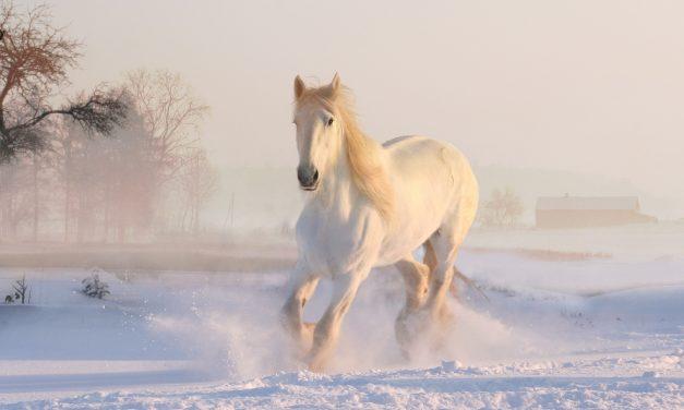Slavni konji u srpskoj istoriji – mitovi i pesme (1. deo)