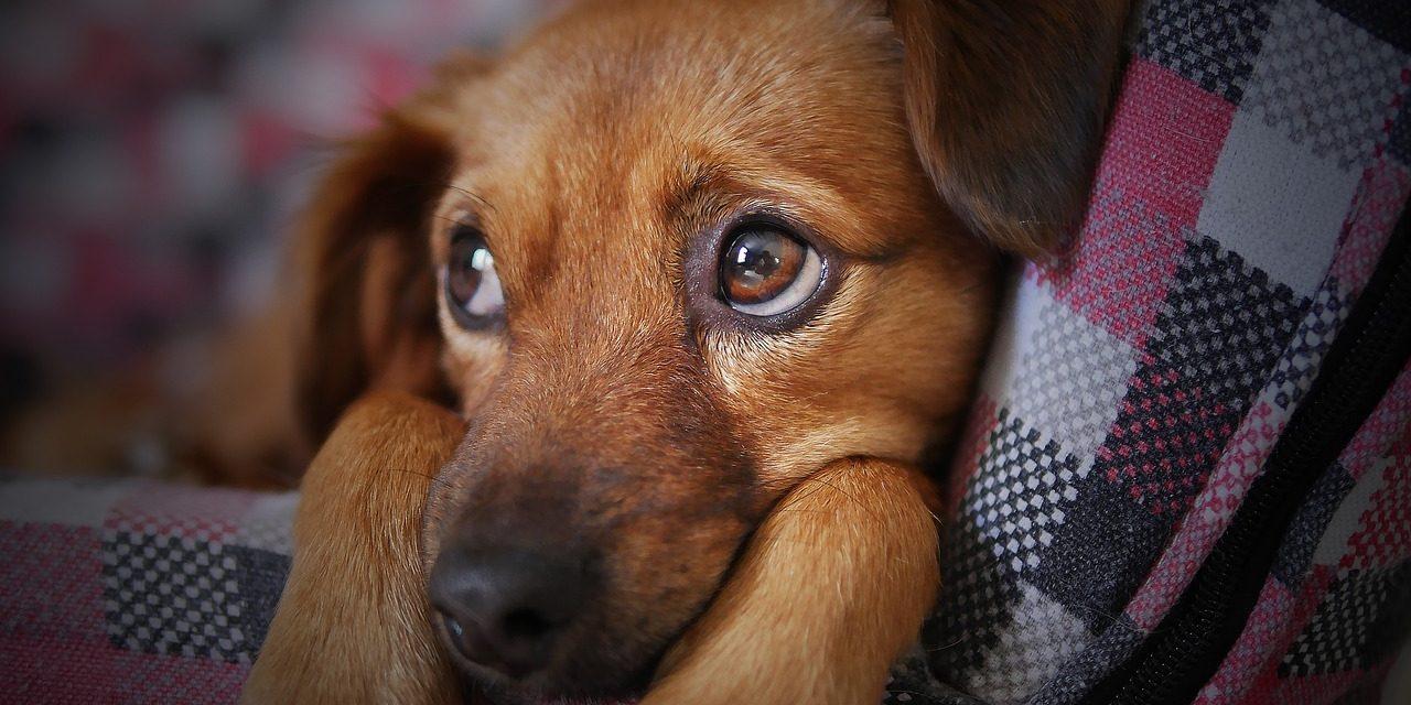 KAKO SI MOGAO? (Ako želite imati psa – pročitajte ovu priču)