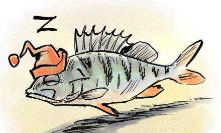 Da li ribe spavaju?